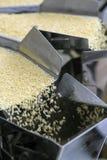 Automated food factory. Make fresh pasta royalty free stock image