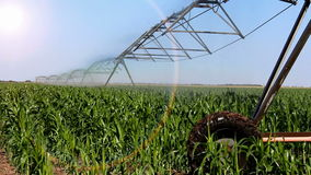 Automated irrigation system stock video