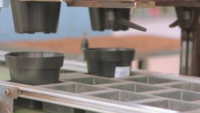 Automated line in the greenhouse for growing flowers. Conveyor in a flower greenhouse. Modern greenhouse stock footage