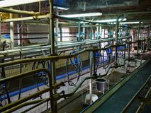 Automated milking equipment milking parlour Royalty Free Stock Photos
