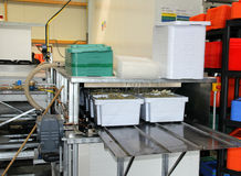 Automatic asparagus wash Stock Photo