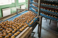 Automatic bakery production line with sweet cookies on conveyor belt equipment machinery in confectionary factory workshop royalty free stock photography