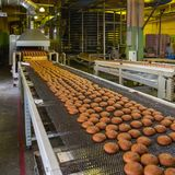 Automatic bakery production line with sweet cookies on conveyor belt equipment machinery in confectionary factory workshop royalty free stock images