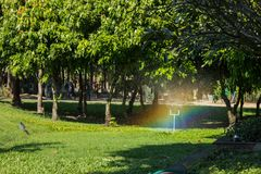 Automatic Garden Lawn sprinkler. In action watering grass Royalty Free Stock Photography