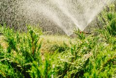 Automatic Garden Lawn sprinkler in action watering grass. Automatic Garden Lawn sprinkler watering grass stock image
