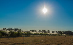 Automatic irrigation crops under sunlight Stock Image