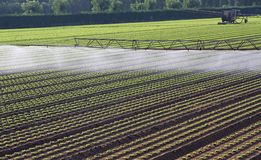Automatic irrigation system for a field of fresh salad Stock Photo