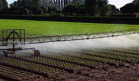 Automatic irrigation system in the field Stock Image