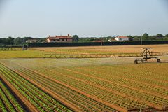 Automatic irrigation system for a field of green salad prepared Royalty Free Stock Photography