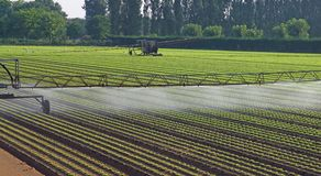 Automatic irrigation system for a field of salad Stock Photo