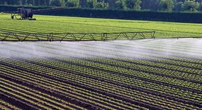 Automatic irrigation system for a field of salad Stock Image