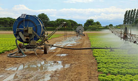 automatic irrigation system of a lettuce field in summer Royalty Free Stock Image