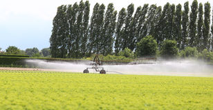 Automatic irrigation system of a lettuce field in summer Royalty Free Stock Images