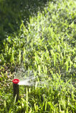 Automatic Lawn Grass and Garden Sprinklers Royalty Free Stock Images