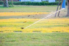 Automatic lawn sprinklers watering over green grass royalty free stock photo