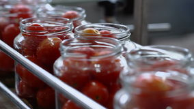 Automatic Line for Processing and Canning Vegetables . Preserving Tomatoes 3 stock video footage