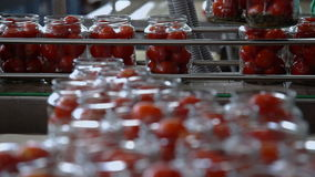 Automatic Line for Processing and Canning Vegetables . Preserving Tomatoes 4 stock video