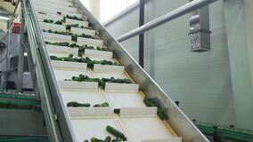 Automatic line for processing of vegetables. Preserving cucumber. Canned cucumbers. Glass jars with cucumbers and spices