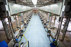 Automatic milking system. In cow farm. Agriculture and industrialization Royalty Free Stock Photography