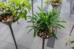 Automatic plant watering installed under small rock stone. In metal pot stock photos