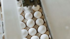 Automatic process of checking and printing on chicken eggs, sorting eggs, assortment royalty free stock photos