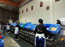 Automatic sorting line Stock Image