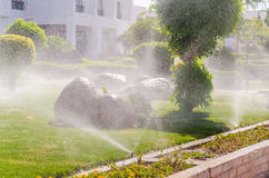 Automatic Sprinkle plants in the garden Royalty Free Stock Photography