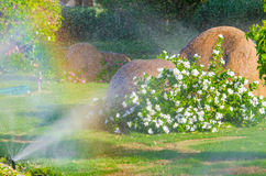 Automatic Sprinkle plants in the garden Stock Photography