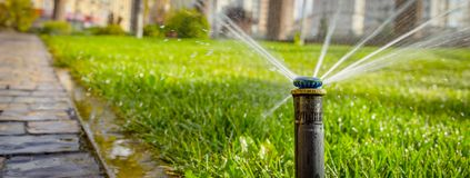 Automatic sprinkler system watering the lawn on a background of green grass. Close-up Stock Image