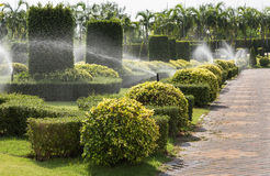 Automatic sprinkler watering to shrub trees in the garden Stock Images