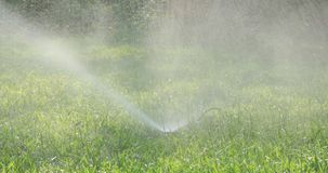 Automatic sprinklers watering green grass stock video footage