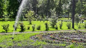 Automatic watering the flowerbed stock video