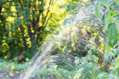 Automatic watering of the garden Royalty Free Stock Image