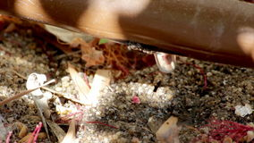 Automatisch Irrigatiedripper pijpsysteem Royalty-vrije Stock Foto's
