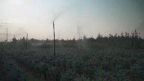 Automatische Bewässerung von kleinen Kiefern stock video