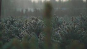 Automatische Bewässerung von kleinen Kiefern stock footage