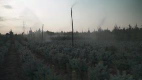Automatische Bewässerung von kleinen Kiefern stock video footage
