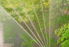 Automatische Bewässerungsvegetation stockfotos