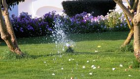 Automatische gazonsproeier op de tuin met groen gras Langzame Motie stock videobeelden