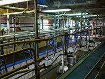 Automatiserad mjölka utrustning som mjölkar parlouren Royaltyfria Foton
