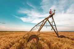 Automatiserat bruka bevattningmaskineri med spridare i kornfält arkivfoton