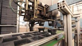 Automatisierte Betriebsvorbereitungslinie, moderne Betriebswachsende Anlagen, Blumen, die F?rderer pflanzen stock footage