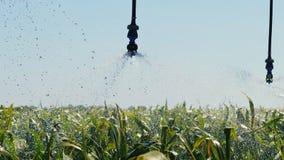 Automatisiertes Bewässerungssystem auf dem Feld Wasser-Bewässerung stock video