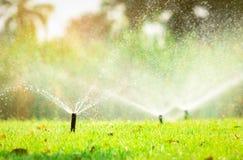 Automatisk gräsmattaspridare som bevattnar grönt gräs Spridare med det automatiska systemet Trädgårds- bevattningsystem som bevat royaltyfria bilder