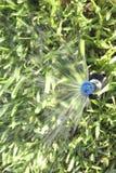 Automatiska gräsmattagräs- och trädgårdspridare Arkivbilder