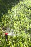 Automatiska gräsmattagräs- och trädgårdspridare Royaltyfria Bilder