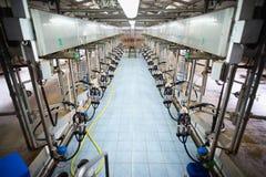 automatiskt mjölka system Royaltyfri Fotografi