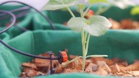 Automatyczny system irygacyjny dla kwiat?w w ogr?dzie zbiory