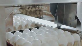 Automatyzująca maszyna zaznacza kurczaków jajka w małym domu wiejskim zbiory