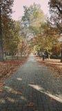 Automn在公园 免版税库存图片